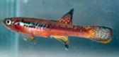 fwkillifishe1350415857t.jpg