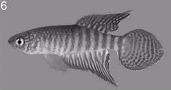 00-0-Copr_2014-W_Costa-Holotype-UFRJ_9729t.jpg