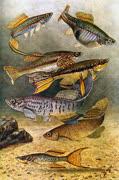 Ernst_Bade_1915_The_Freshwater_Aquariumt.jpg