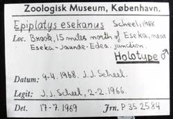 02-0-Copr_1966-JJ_Scheel_Holotype_NHMD_P352584t.jpg