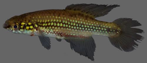 2016 fish