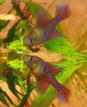 00-0-Copr_2018-Jan_Tropicalfishlovert.jpg