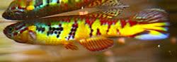 00-1-Copr_2011-Josegs721t.jpg