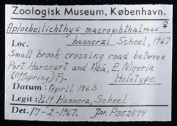 02-0-Copr_1963-JJ_Scheel_Holotype_NHMD_P352574t.jpg