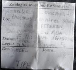 03-0-Copr_1963-JJ_Scheel_Holotype_NHMD_P352574t.jpg