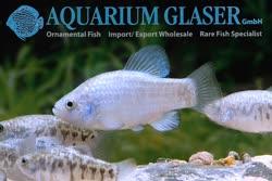 02-0-Copr_2019-Aquarium_Glasert.jpg