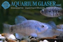 05-0-Copr_2019-Aquarium_Glasert.jpg