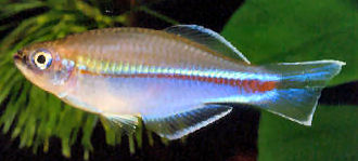 Poecilioidea