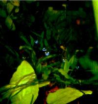 29-1-Copr_2005_RJ_Sextont.jpg