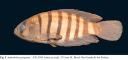 00-0-Copr_2017-WEJM_Costa-Holotype-UFRJ_8583t.jpg