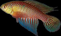 00-0-Copr_2018-WEJM_Costa-Holotype_UFRJ_6909-42mmt.png